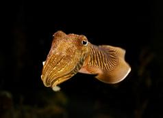baywatch75_cuttlefish